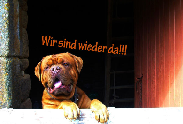 english-bulldog-1522684_1280 Kopie